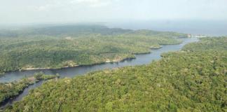 Amazônia, a desinformação destrutiva