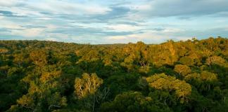 O protagonismo amazônico no acordo do clima